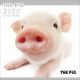 THE PIG 2020 カレンダー