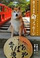 命のメッセージ 捨て犬・未来 東日本大震災・犬たちが避難した学校