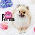 ポメラニアンカレンダー 2014