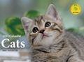 Cats カレンダー 2014