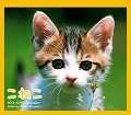 こねこ Kitty Calendar ミニ 2014