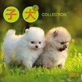 子犬CLLECTION カレンダー 2013