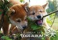 ドッグズアルバム 柴犬カレンダー 2014