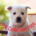 子犬Collectionカレンダー 2014