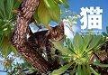 猫 World Cat CALENDAR 2014