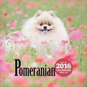 ポメラニアンカレンダー 2016