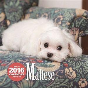 マルチーズカレンダー 2016
