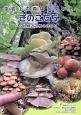 藻岩山の森林と関わるきのこたち&札幌近郊林のきのこ