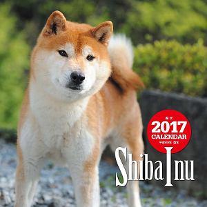 2017年大判カレンダー 柴犬