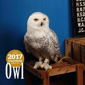 2017年大判カレンダー フクロウ