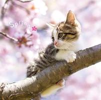 まるごと!春 -Spring-