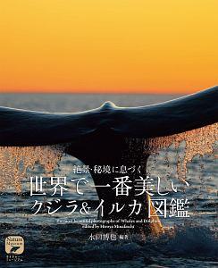 世界で一番美しい クジラ&イルカ図鑑