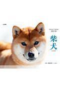 柴犬 カレンダー