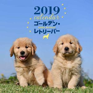 大判カレンダー ゴールデン・レトリーバー 2019