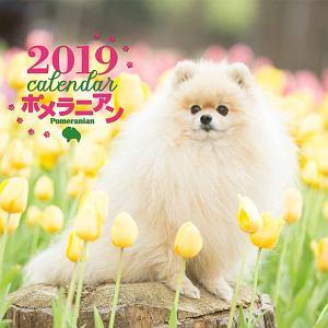 大判カレンダー ポメラニアン 2019