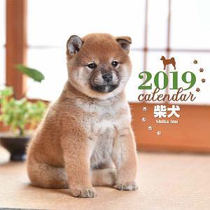大判カレンダー 柴犬 2019