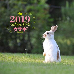 大判カレンダー ウサギ 2019