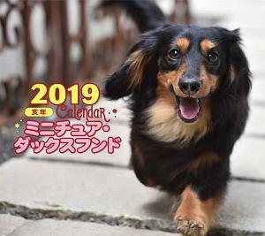 ミニカレンダー ミニチュア・ダックスフンド 2019