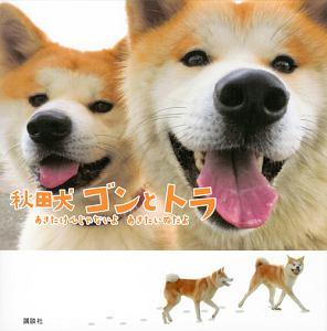 秋田犬 ゴンとトラ
