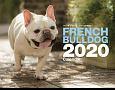 FRENCH BULLDOGカレンダー 壁掛け 2020