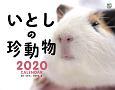 いとしの珍動物カレンダー 壁掛け 2020