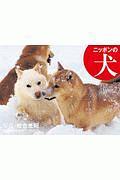 岩合光昭 カレンダー ニッポンの犬 2020