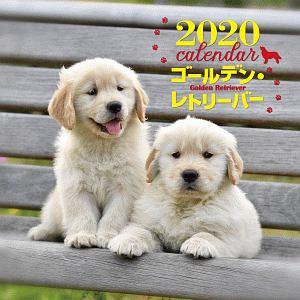 大判カレンダー ゴールデン・レトリーバー 2020