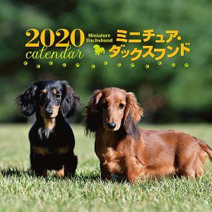 大判カレンダー ミニチュア・ダックスフンド 2020