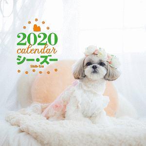 大判カレンダー シー・ズー 2020
