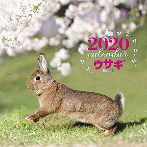 大判カレンダー ウサギ 2020