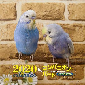 大橋和宏『大判カレンダー コンパニオン・バード インコ&オウム 2020』