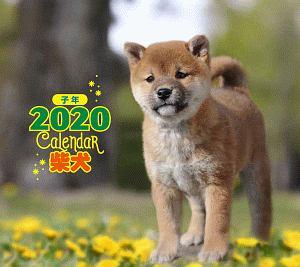 ミニ判カレンダー 柴犬 2020