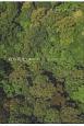 綾の原生 森のピカソ…どこへ