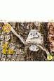 太田達也セレクション 森の動物たち Tiny Story in the Forests カレンダー 2020