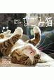 週めくりカレンダー なごみ猫〈卓上〉 2020