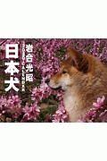日本犬 カレンダー 2020
