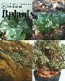 B.plants-ビザールプランツ- ケープバルブからハオルチア、コノフィツムまで冬型珍奇植物最新情報