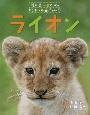 ライオン 教科書にのってるどうぶつの赤ちゃん1