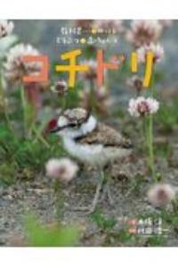 木坂涼『コチドリ 教科書にのってるどうぶつの赤ちゃん』